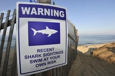 미, 상어 습격으로 20대 남성 사망