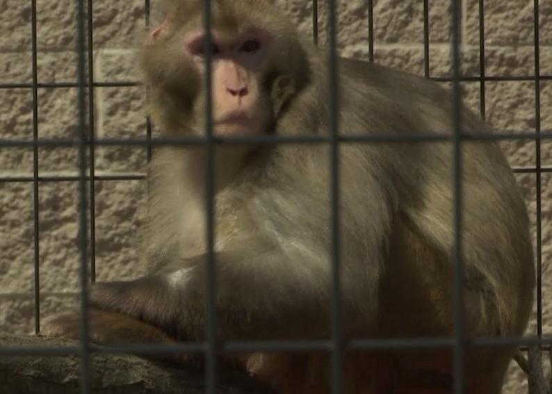 미, '연구용 원숭이' 은퇴 추진